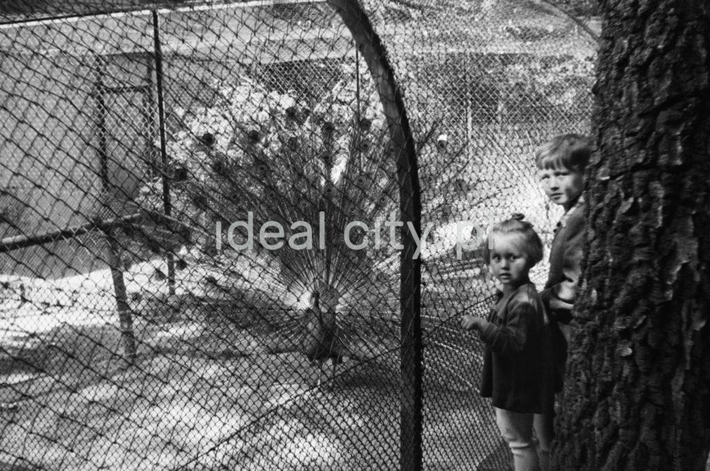 Dwójka dzieci pozuje przy siatce, za którą pióra stroszy paw.