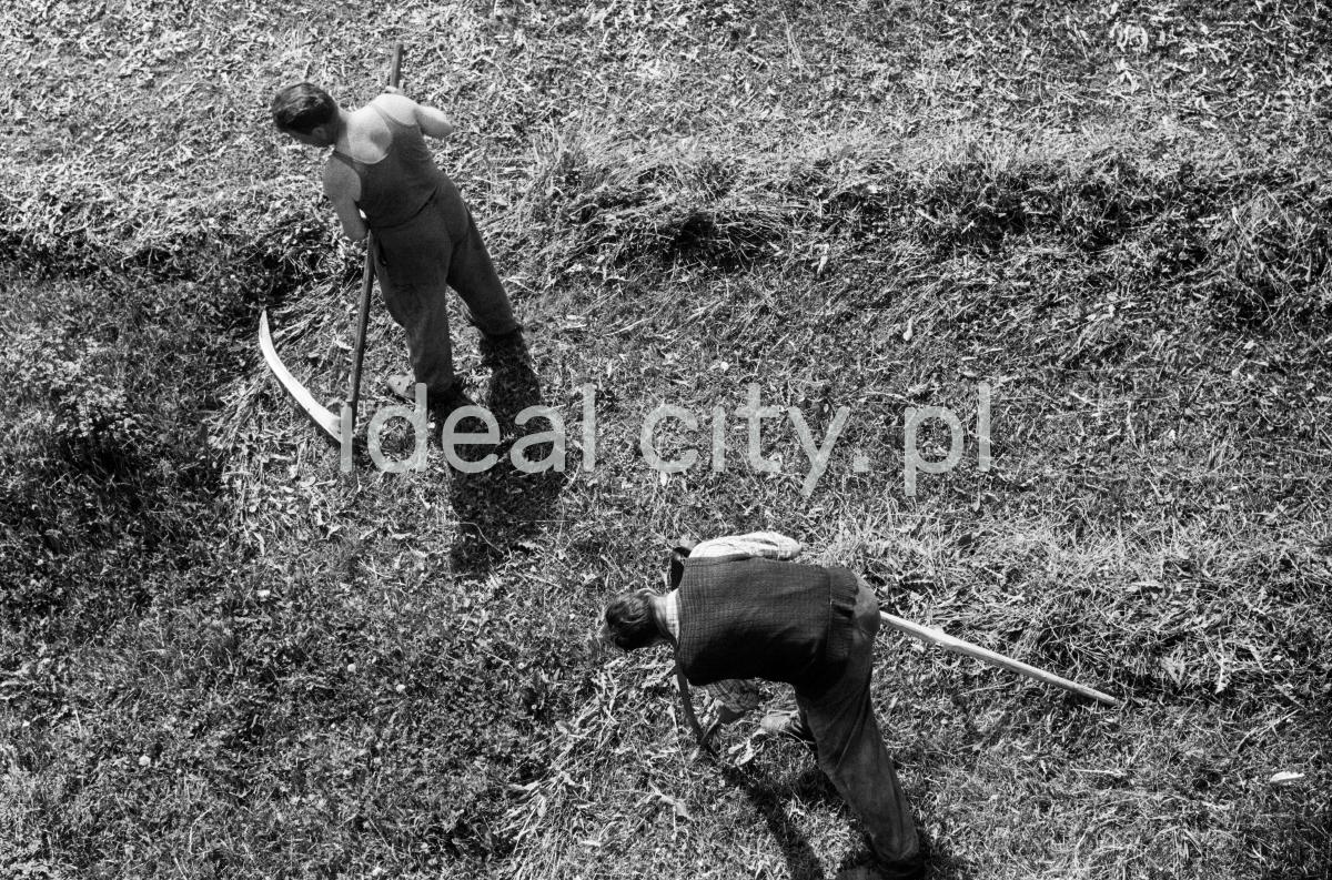Ujęcie z góry na dwie osoby z kosami pochylone nad trawą.