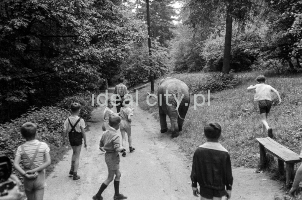 Rear view of a group of children walking with a small elephant along an asphalt path through the forest.