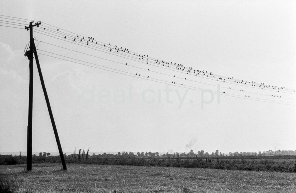 Birds sitting on telegraph wires.