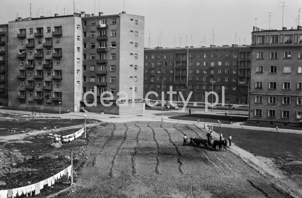A horse-drawn cart plows a field between apartment blocks, on the left, laundry is hung over the ground.
