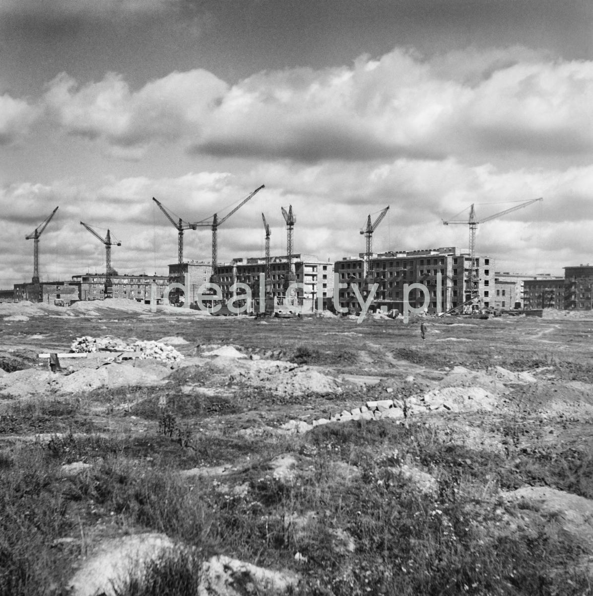 Na pierwszym planie łąka, w tle plac budowy, wznoszone budynki i żurawie.