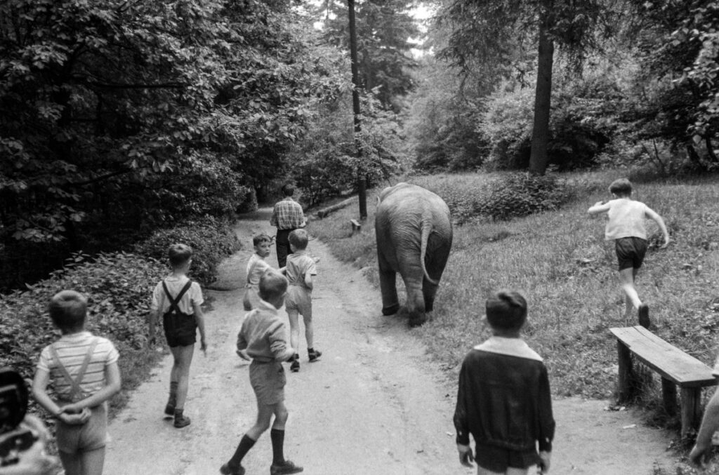 67/5000 Rear shot of children walking along a park alley with a baby elephant.