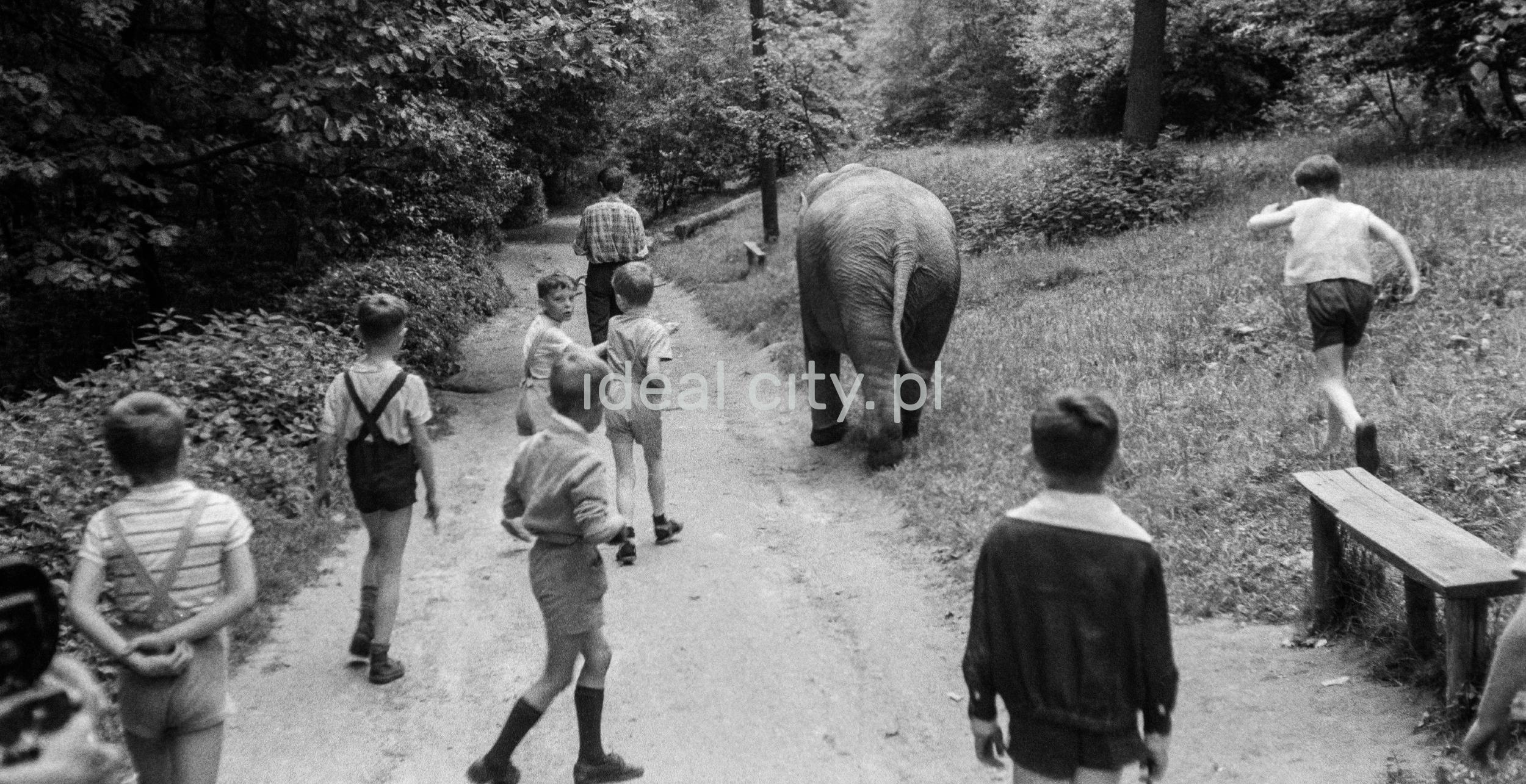 Dzieci spacerują leśną alejką ze słoniem.