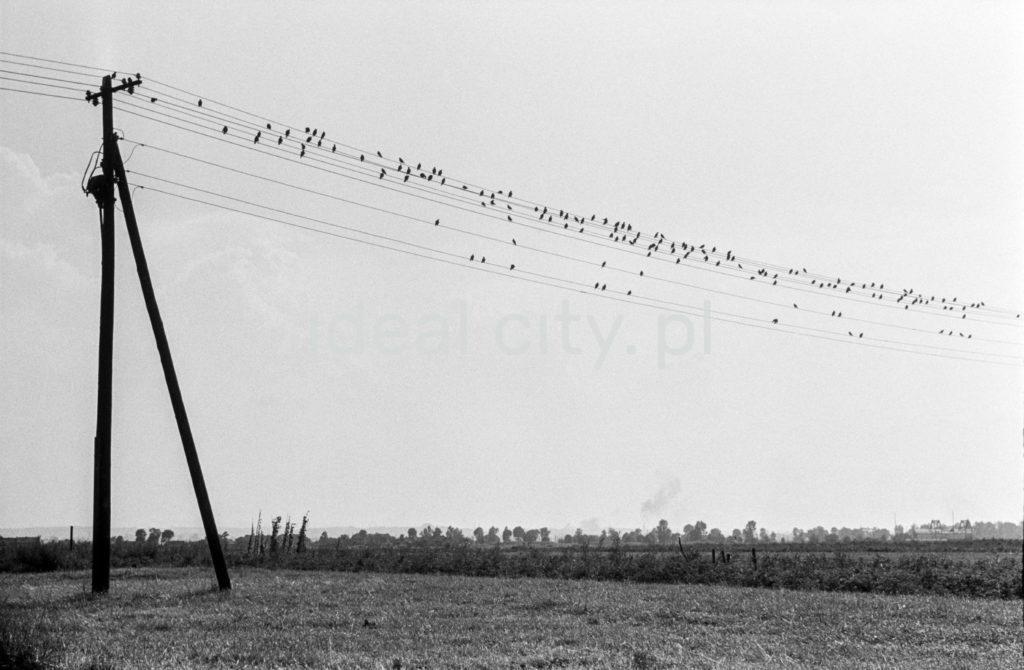 Ptaki siedzą na liniach wysokiego napięcia.