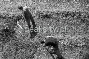 Mowing the lawn on the Wandy Estate. 1950s.
