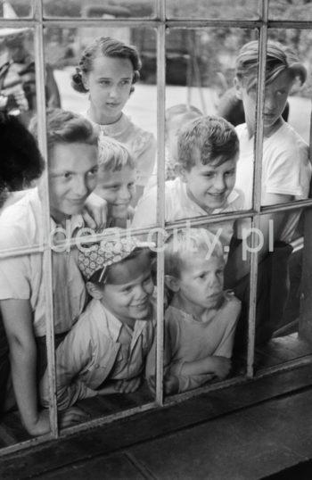 Dzieci obserwują Lajkonika przygotowującego się do corocznego pochodu. Koniec lat 60. XXw.  fot. Henryk Makarewicz/idealcity.pl