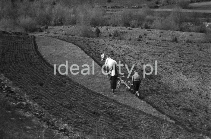 Uprawa roli. Małopolska. Lata 60. XXw.  fot. Henryk Makarewicz/idealcity.pl