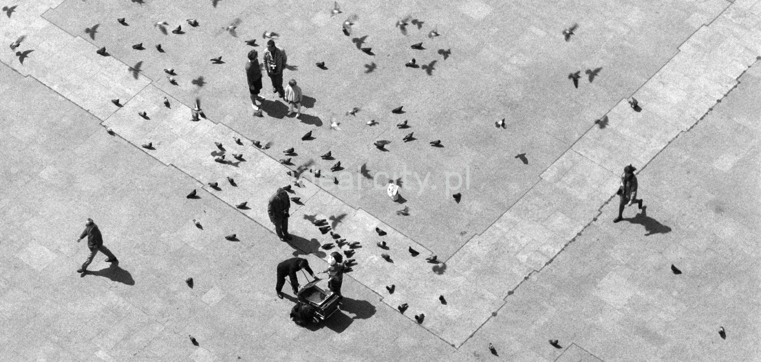 Drobne sylwetki ludzi widziane z góry, pomiędzy nimi gołębie.