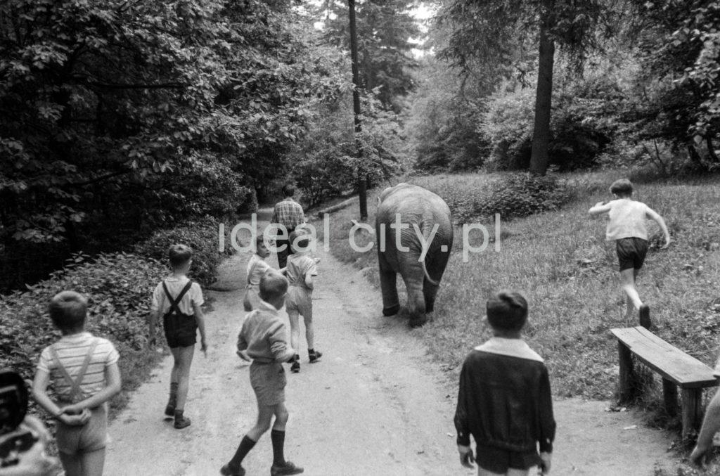 Mały słoń spaceruje wraz z dziećmi asfaltową alejką w lesie.
