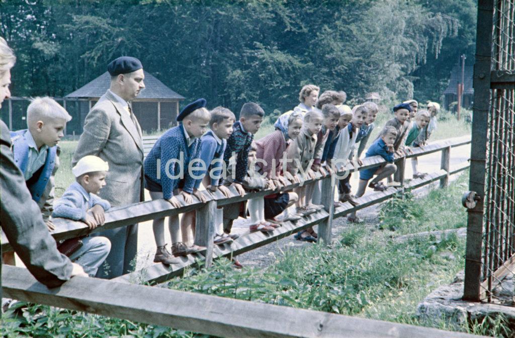 Młodzież przechylona przez barierkę obserwuje niewidoczne na zdjęciu zwierzę.